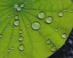 纳米水性防指纹油